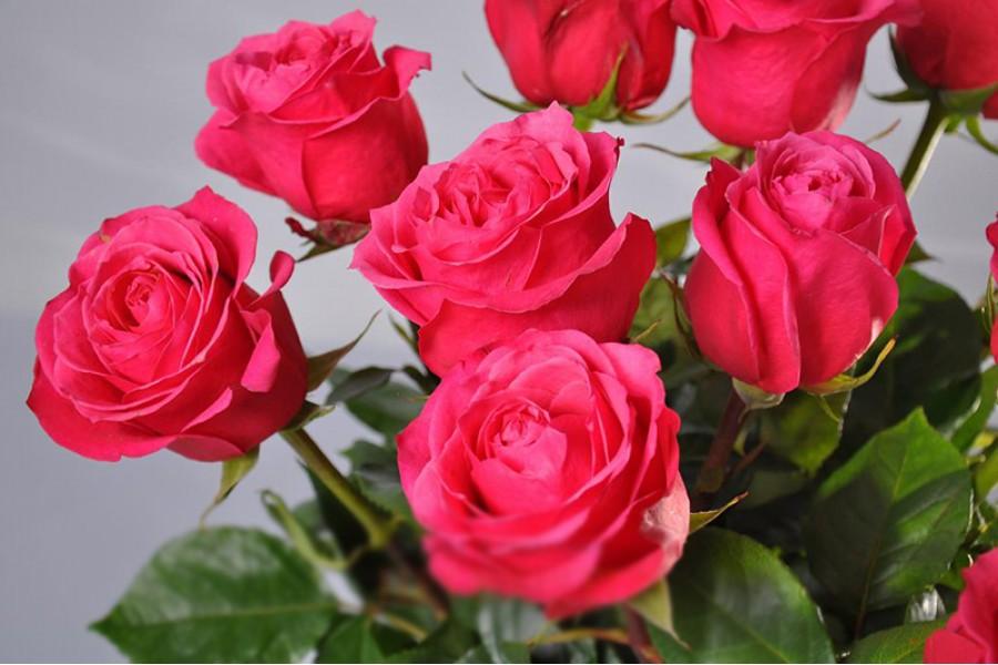 Черри роза фото
