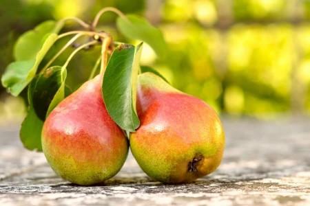 Дерево-сад груша Августовская роса-Кармен-Северянка краснощекая