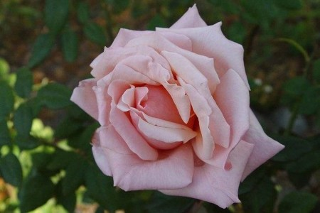 Роза Эмма де Мейян