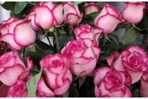 Роза Карусель