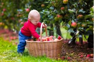 Яблоня Детское