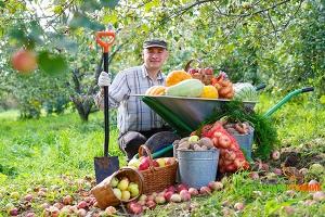 5 основных задач, которые надо выполнить садоводам в первой половине осени