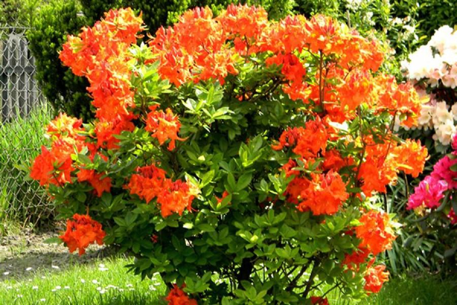 Цветы на доращивание спб