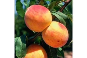 Персик Юбилейный