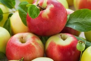 Дерево-сад яблоня Жигулевское–Антоновка–Орловское полосатое