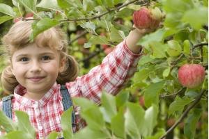 Яблоня Орловим Осенняя