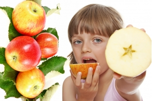 Яблоня Первый салют Летняя