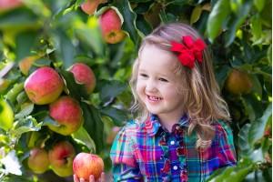 Яблоня Родниковая Осенняя