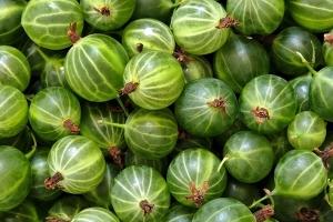 Крыжовник Темно-зеленый Мельникова
