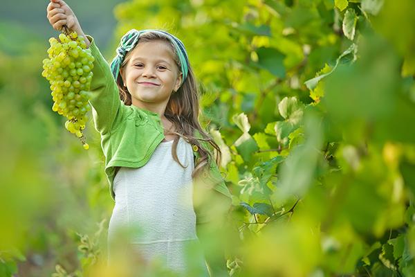Саженцы Винограда - Каталог для садоводов