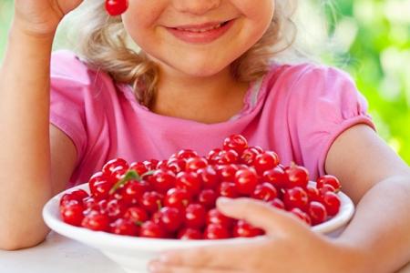 Вишня Уральская рубиновая кустарниковая