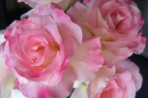 Роза Седукцион