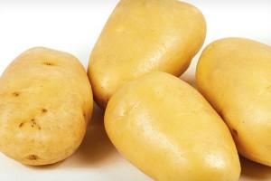 Семенной картофель Зекура